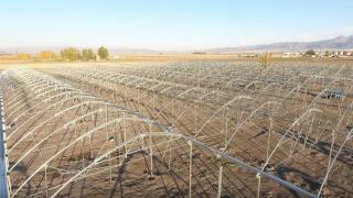 Erzurum'da kışın da domates üretilecek