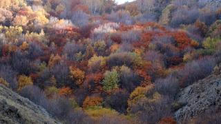 Ağrı'da vadiler sonbahar renklerine büründü