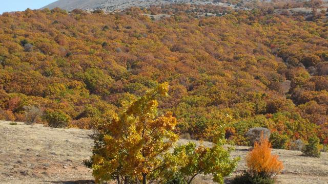 Sivasta Tecer Dağı ve Paşabahçe Mesire Alanı sonbahar renkleriyle etkiliyor