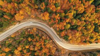 Uludağ'da sonbahar renkleri