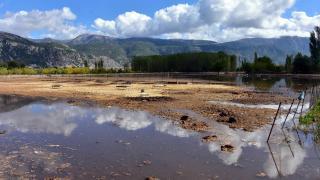 Muğla'da yağış: Hayvanlar öldü, arazileri su bastı