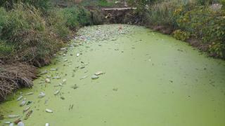 Kirlilikle gündeme gelen tahliye kanalında inceleme yapıldı