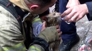 Dumandan etkilenen kedi kalp masajıyla hayata döndü