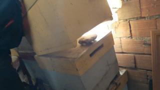 Uyuşturucuyu arı kovanlarına ve samanlığa gizlediler