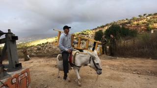 Batı Şeria'da İsrail ablukası altında zeytin hasadı