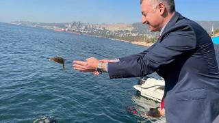 İzmit Körfezi'ne 6 bin çipura, levrek ve kalkan bırakıldı