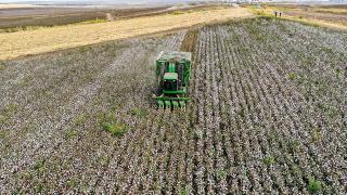 Diyarbakır'da pamuk verimiyle çiftçinin yüzünü güldürdü