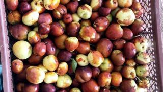 Bozkırda dondan etkilenmeyen hünnap meyvesini yetiştirerek tanıtıyor
