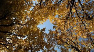 Iğdır sonbahar renklerine büründü