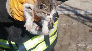 Konya'da çıkan yangında kedi yavrusunu itfaiyenin dikkati kurtardı