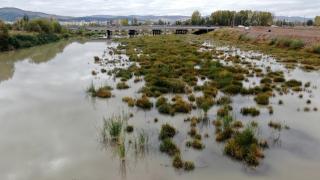 Türkiye'nin en uzun nehri Kızılırmak otlağa dönüştü