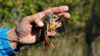 Küresel iklim değişikliği kuşların göç ve konaklama zamanlarını da değiştirdi