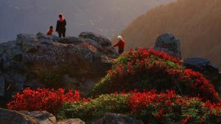 Sis Dağı'nda sonbahar renkleri güzel görüntüler oluşturdu