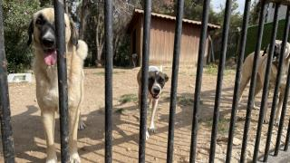 Sokak hayvanlarını modern imkanlarla tedavi edip sahiplendiriyorlar