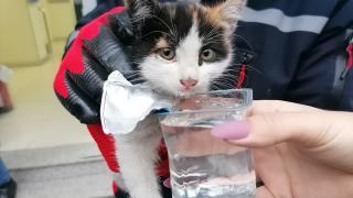Mermer basamağın altında mahsur kalan kediyi itfaiye kurtardı