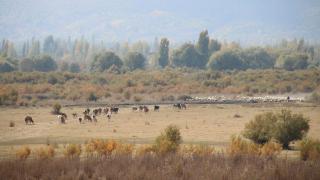 Akşehir Gölü'nde sevindiren gelişme