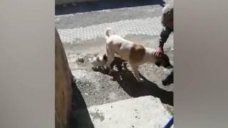 Yavrularının düştüğü kuyunun başından ayrılmadı