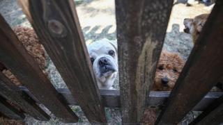 Botta ele geçirilen köpek yavrularının tedavisi sürüyor