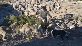 Sahipsiz kalan köpekler destek bekliyor