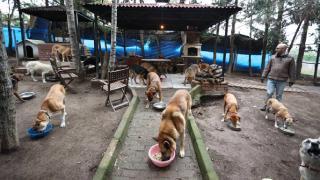Sokaktan kurtardığı hayvanlar rahat yaşasın diye köye taşındı