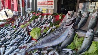 Torik balığının tanesi 350 liradan satılıyor