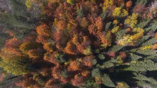 Düzce yaylalarında sonbahar