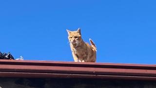 4 yıldır çatıdan inmiyor