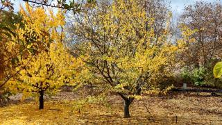 Kırşehir'de park ve bahçelerde sonbahar güzelliği yaşanıyor