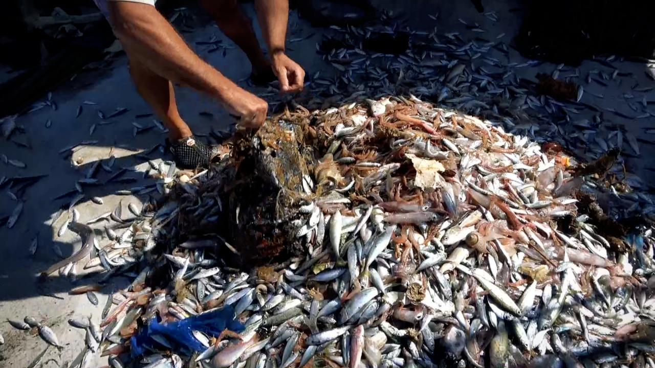 Akdeniz'de balıktan çok çöp çıkıyor, balıkçılar nadas istiyor