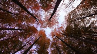 Nebiyan Dağı'nda sonbahar renkleri