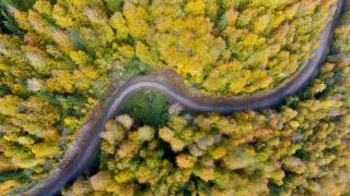 Düzce'nin ormanlarında sonbahar