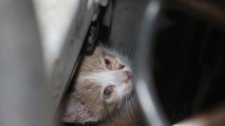 Adana'da kamyonetin motor kısmına sıkışan yavru kedi kurtarıldı