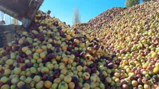 Döküntü elmalar meyve suyu oluyor
