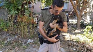Polisten sokak hayvanlarına destek
