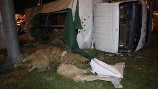 Devrilen kamyonetteki 15 koyun telef oldu