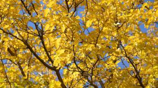 Kırşehir'de sonbahar