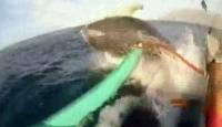 Bota balina çarptı!
