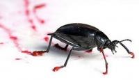 Böcek Ressamlar