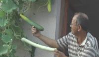 Penceresinden Sebze Topluyor