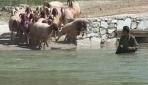 Çobanların Yarışması