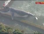 Balinalar bu kez Şilide karaya vurdu