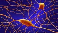 Ruhsal rahatsızlıklarda genetik önemli