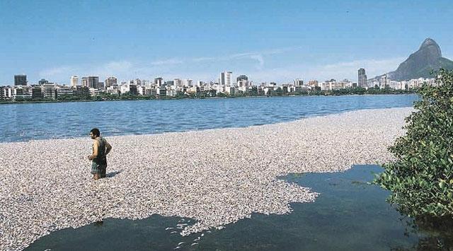 12 bin ton balık telef oldu