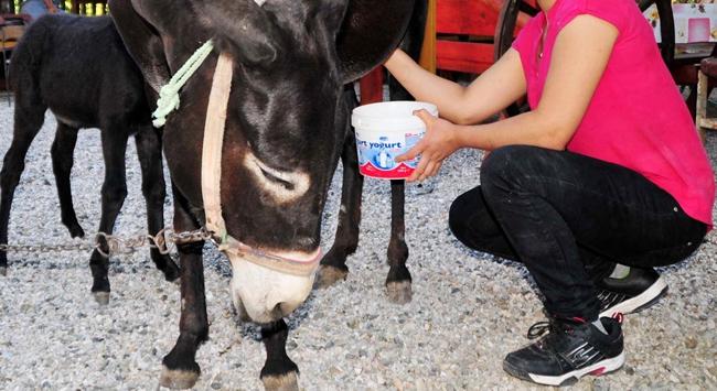 Eşek sütü kanseri iyileştiriyor mu?