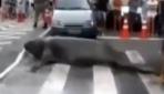 Deniz aslanı trafiği felç etti