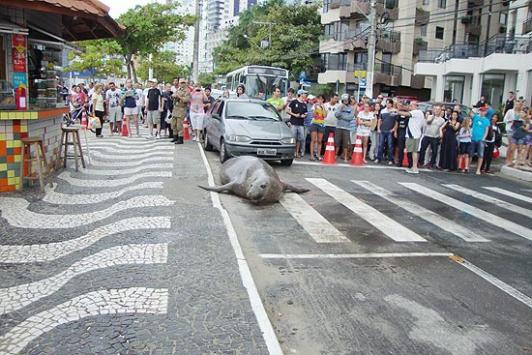 Deniz aslanı trafiğe çıktı