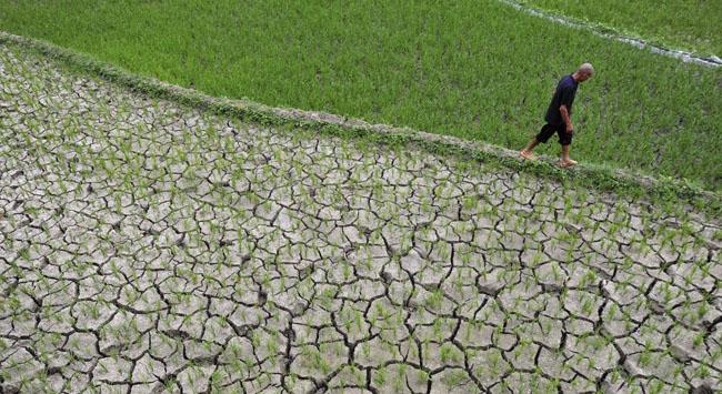 Çini kuraklık vurdu