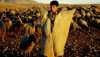 2 bin Liraya Çoban Bulunamıyor