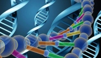 1 Saatte DNA Testi