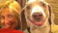 Bu Köpek Fotoğrafları Tıklanma Rekoru Kırıyor